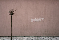Suburban Minimalism (sonofsteppe) Tags: life street winter urban plant detail building tree brick art texture wall composition dark grey graffiti still mural solitude hungary alone moody quiet exterior sad view place flat haiku suburban outdoor unique background bare small budapest bald scene structure dirty pale explore few simplicity depression manmade reality environment lonely minimalism piece removal visual simple solitary mundane dull m