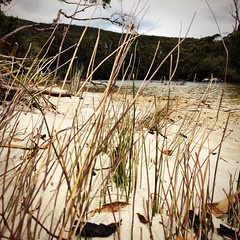 Creek. Fortescue Bay. Tasmania.
