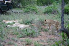 DPP_0025 (skiptontom) Tags: africa tandatula