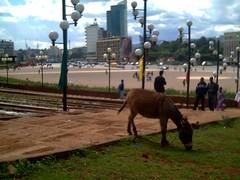Meskel con burro (Addis Abeba)