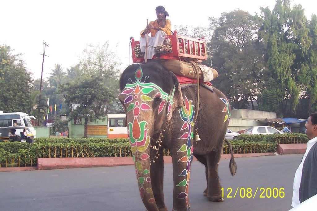 Elephant in Pune near Sarasbaug