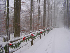 Deck the Trails (CountryDreaming) Tags: christmas trees decorations ohio red snow fence festive ribbons path decoration snowstorm trails fences footprints trail paths snowfall bows christmastime decorated impressedbeauty