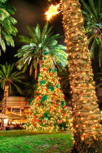 christmas palm tree - photo #20