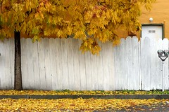 Yellow at Webster (gwen) Tags: autumn winter white tree fall 20d leaves yellow leaf parkinglot parking lot taylor meter fav parkingmeter alameda webster pf calendar07