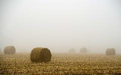 field fog - by McBeth