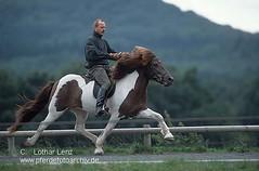 isl24726 (Lothar Lenz) Tags: horse caballo cheval cavalo pferd reiten