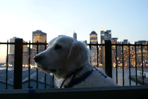 Contemplative Frisket