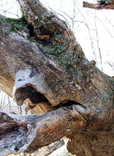 locust roots 5
