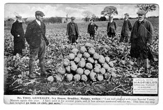 A postcard advertising Hadfield's Special Turnip Manure