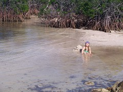 Swimming in the mangroves