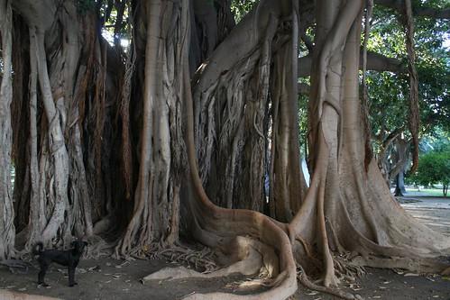 Hasil gambar untuk akar beringin