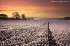 Said_Watch (Dgfosters) Tags: david tree field sunrise frost yorkshire north foster foo feed godfather subfoz mologo