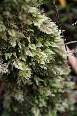 (Delkeresztje) Tags: fern rainforest australia victoria greatoceanroad ferntree maits maitsrest