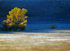 Tree in Morning Light (BlueOakPhotos) Tags: california county morning autumn light tree fall nature field landscape hill centralvalley sacramentovalley naturesfinest yolo specnature blueoakphotos