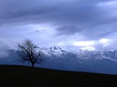 Tropoja tree 2 (kosova cajun) Tags: winter mountains tree landscape balkans albania snowcappedpeaks peisazh southeasterneurope bajramcurri northernalbania tropoja