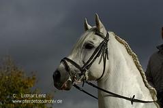 _LE57905 (Lothar Lenz) Tags: horse caballo cheval pre cavalo pferd reiten hest equus paard hst hestur dressur zaumzeug reiterin andalusier mhne konj hobu zirgs reitplatz lotharlenz impressedbeauty tanjarlle kombiniertessperrhalfter