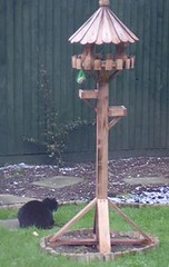 cat and birdtable