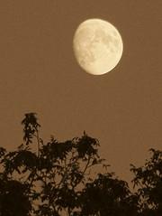 sepia moon - by areyoubrigitte