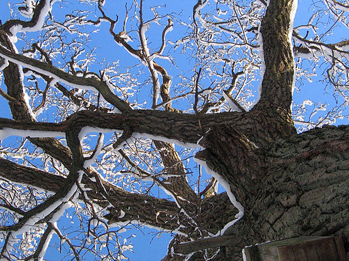 A tree with snow