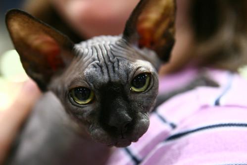 sphinxcat.jpg