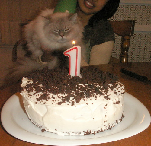 jack baobao turned 1!