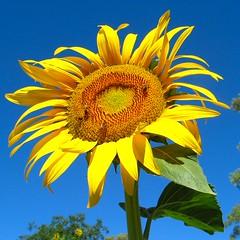 Good Morning Sunshine 164_6459 03