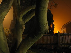IMG_0514.JPG (gingeralbert) Tags: tree fog night canon lights deleteme10 moment g7