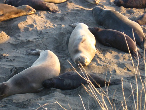 Cute seals!