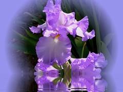 A flower for Glenda (hammyham) Tags: flowers floralcreations