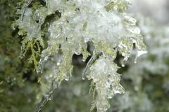 Annapolis Ice Storm 70358