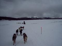 100_5569 (jeepinjason) Tags: vacation snow ski colorado vail dogsledding snowskiing