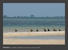 _KDL3765-2 (AIB - Angola Image Bank por KODILU Fotografia) Tags: mussulo luanda angola mangais mangrooves sea ocean mar topf25 topv111 topv333 topf50 topv555 topv1111 angolaimagebank wwwangolaimagebankcom angolaemfotos angolainphotos kodiluphotography