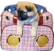 Stereo Pet Carrier
