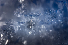 Ice Crystals 3 of 3 (Don White (Burnaby)) Tags: 26mm centralpark extensiontube macro sigma30mmf28 bokeh ice snow
