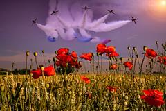 POP0014 (Smart Aviation Art) Tags: poppy poppies poppyfield poppyfields lancaster vulcan avro spitfire hurricane aircraft military bbmf
