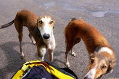 За поворотом нас встречают псы. Голодны до безобразия, видать учуяли в моем рюкзаке запах ништяков. Ласкаются, смотрят жалобно, как не поделиться с такими псами едой?