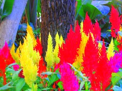 IMG_0441 (HankyPants) Tags: flower color newjersey estate nj duke conservatory greenhouse dukegardens astilbe dorisduke displaygarden 1000placesusa savedukegardens