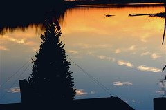 Christmas On Ellserlie Lake ⅈⅈⅈ (mightyquinninwky) Tags: christmas wood trees sky reflection water clouds pier dock december kentucky lexingtonky richmondroad waterscape fayettecounty centralkentucky coveredboatslip ellserlielake