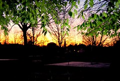Fisbury Park [open space] (GatheringZero) Tags: park tree london leaves sunrise glare flash finsburypark geoffsbirthdaybonanza