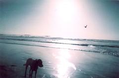 San Diego Silhouette