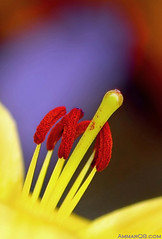 Flower Heart (Ammar Alothman) Tags: flowers flower macro nature colors rose garden interesting nikon flickr dof gulf calendar bokeh d70s 2006 explore kuwait 105 ammar kuwaitcity kw q8 105mm   ammaralothman 3mmar  kuwaitvoluntaryworkcenter