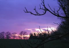 Let dreamers dream (zenera) Tags: pink trees sunset sky sun love silhouette landscape hope countryside lyrics nikon peace dusk song zenfli branches violet indigo mauve gloaming frankiegoestohollywood maximumjoy