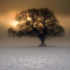 Winter Glow 2