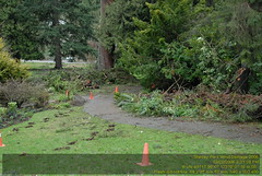 Stanley Park Wind Storm 2006 VFK_8723.JPG (vfk) Tags: park trees canada storm vancouver geotagged wind destruction 2006 columbia stanley damage british geolon123133333333333 geolat492993333333333