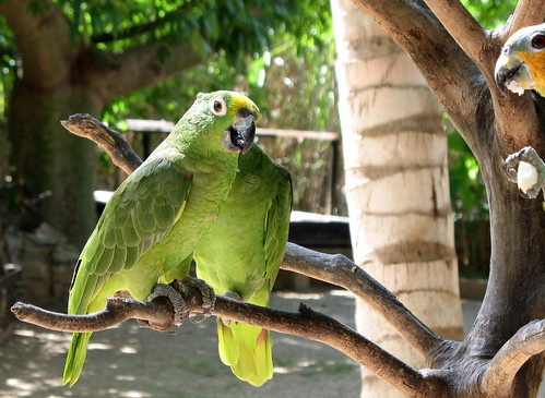 The parrots were manhandled into posing with the tourists. It all seemed a little harsh and a touch cruel.