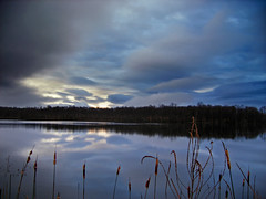 Glazed (Nicholas_T) Tags: winter sky lake clouds rural lowlight dusk pennsylvania cattails creativecommons poconos pikecounty stratocumulus peckspond easternnorthamericanature portertownship