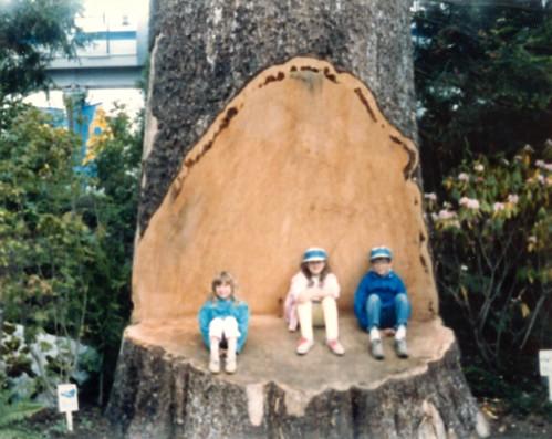 Expo 86 - A... big tree.