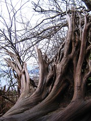 "tangled roots • <a style=""font-size:0.8em;"" href=""http://www.flickr.com/photos/70272381@N00/343446336/"" target=""_blank"">View on Flickr</a>"