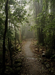 Rainforest (steve_lacy941) Tags: mist rainforest australia queensland nativeplants zd 1454mm peopleplacesevents australianplants auselite rainforesttrees australianrainforestplants