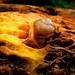 137. Garden snail
